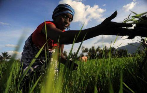 16 Октября - всемирный день продовольствия