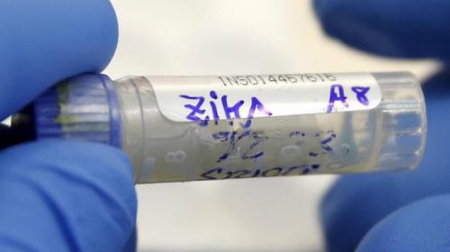 49 Беременных женщин нью-йорка заражены вирусом зика
