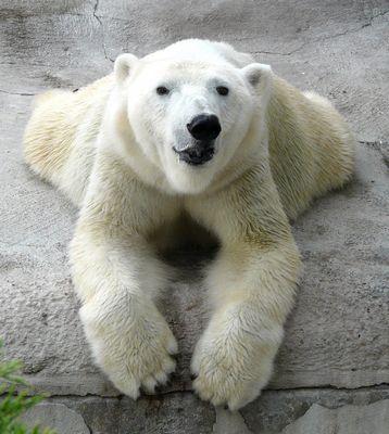 Анвар гатиятулин: расскажу киви о«медведях»