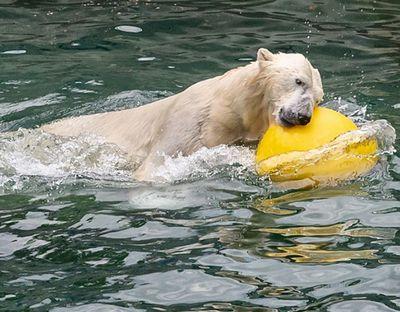 «Я тебя к белым медведям отправлю!» как виктор тихонов поднимал хоккей в латвии