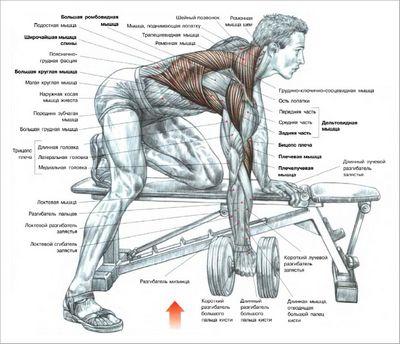 Как накачать грудь. советы и упражнения