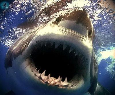 Как выжить при нападении акулы