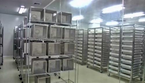 Китайский «завод» по разведению комаров поможет в борьбе с вирусом зика