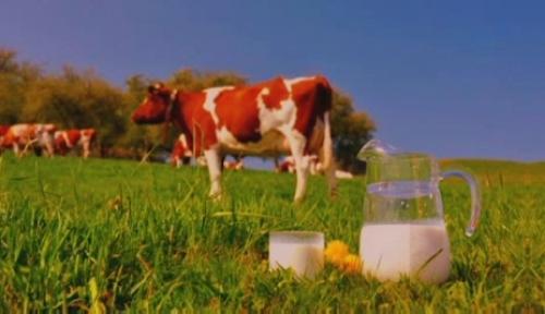 Меркенские молочные продукты могут поступить на зарубежные рынки
