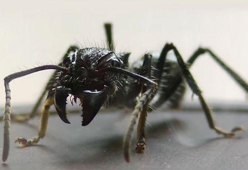 Мужчина испытал на себе самый болезненный укус насекомого (видео)