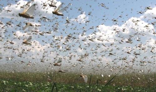 На полях юко борются с особо опасными вредителями