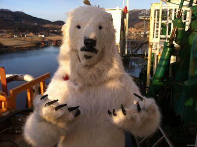 Не моржи, а белые медведи!