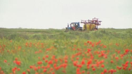Под алматы начали засевать солончаки полезными травами