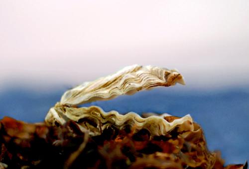 Поиск и добыча жемчуга