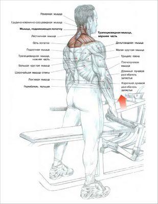 Шраги стоя в тренажере для трапециевидных мышц