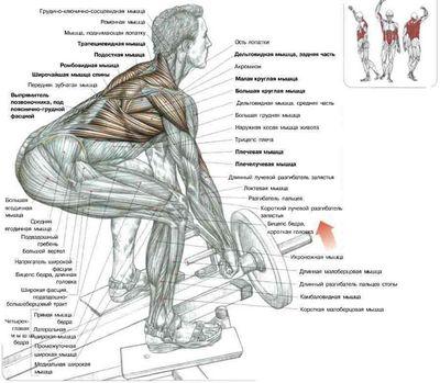 Тренируем спину с помощью тяги т-грифа