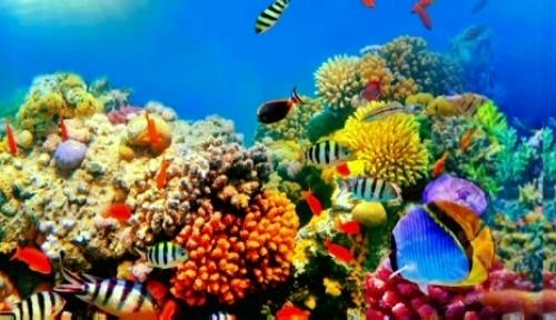 Треть кораллов большого барьерного рифа уничтожена