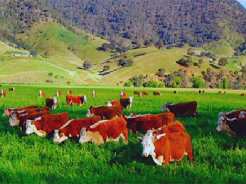 Животноводы зко активно участвуют в госпрограммах по развитию сельского хозяйства